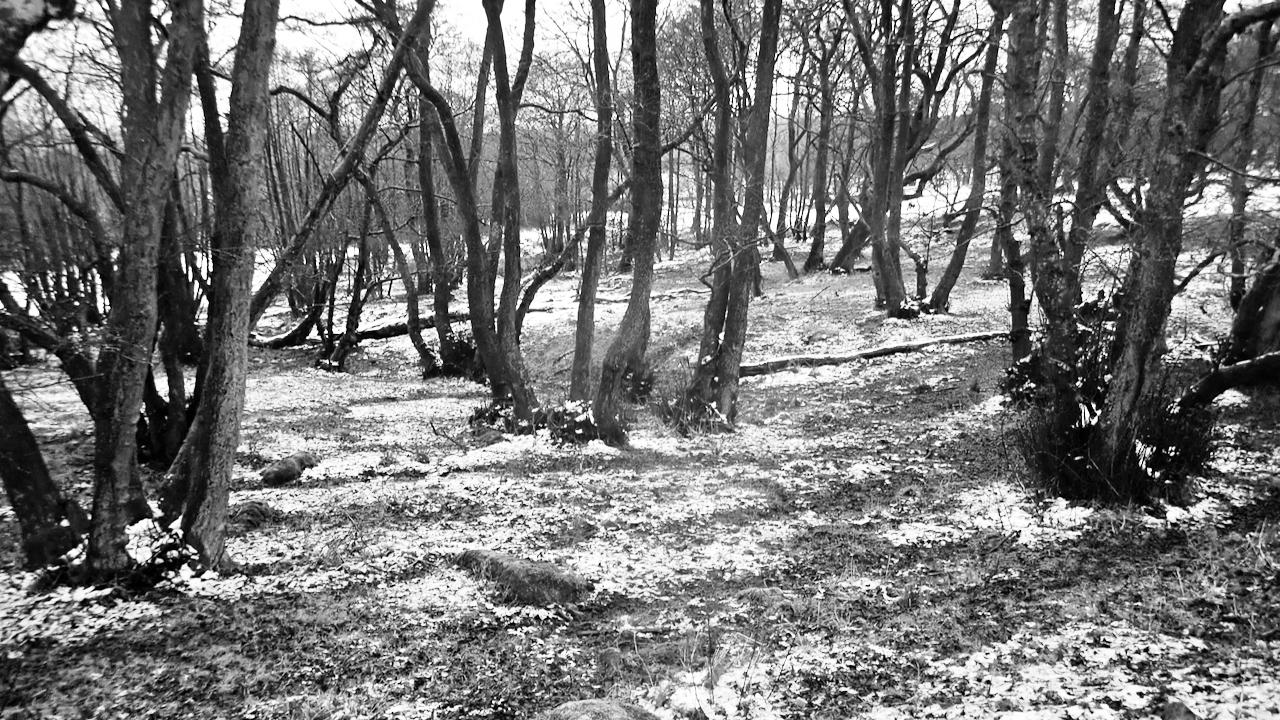 Winter Wood, Greenhow Burton