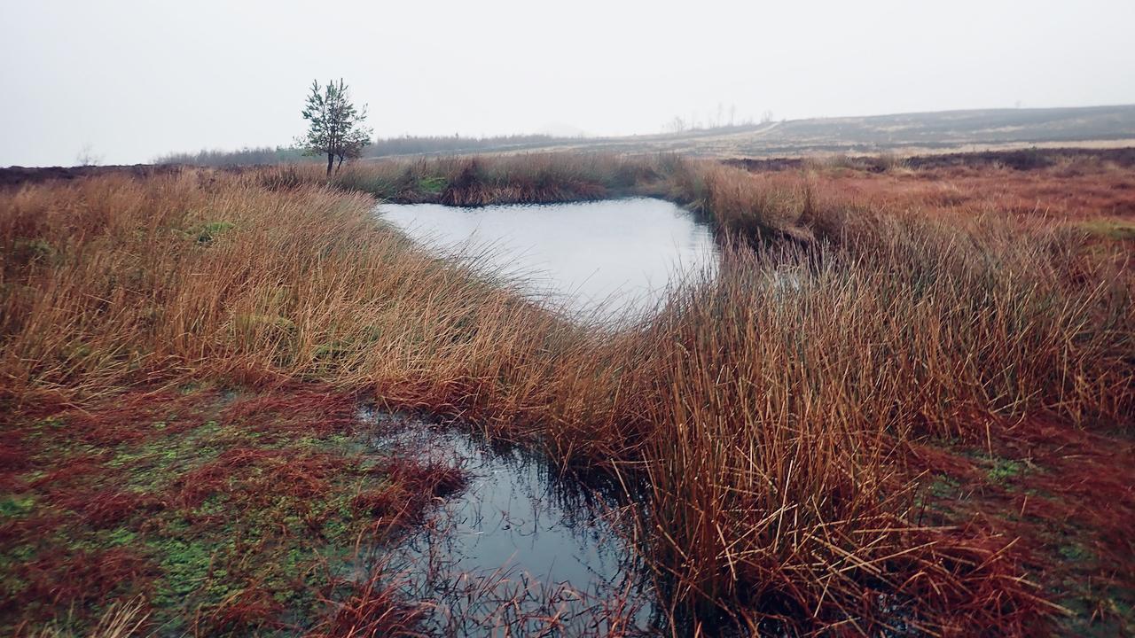 Pond, Newton Moor