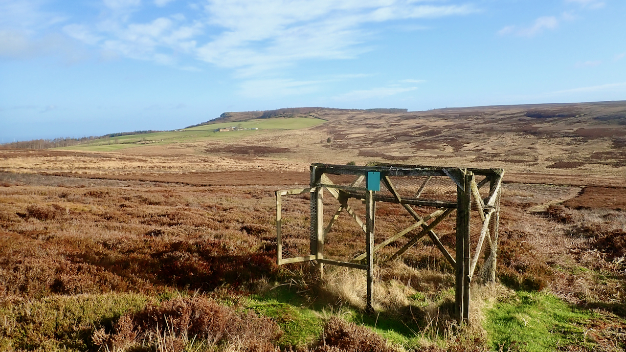 Ladder Trap, Great Ayton Moor