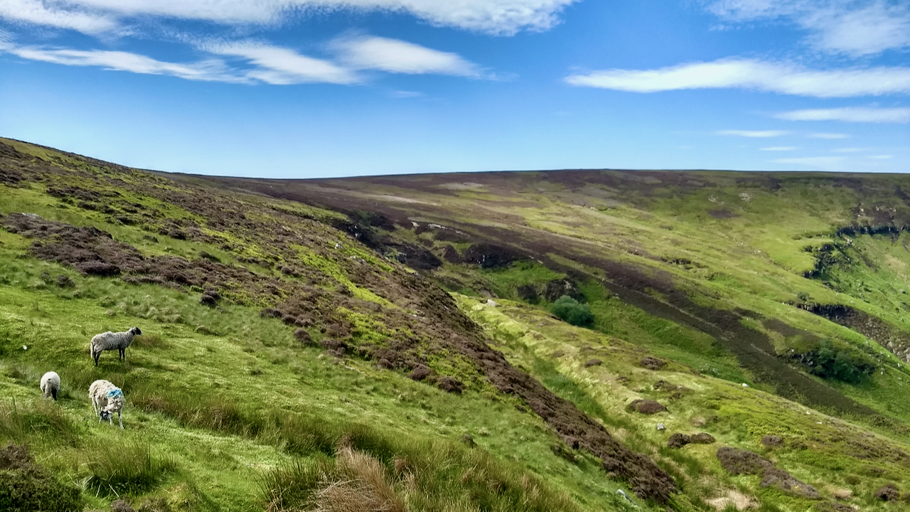 Greenhow Moor