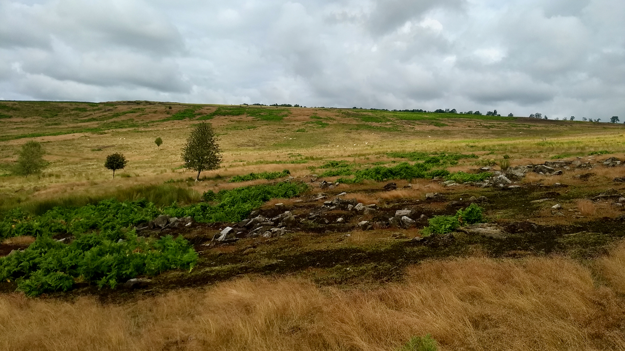 Scarthwood Moor - suggested Neolithic hut circles