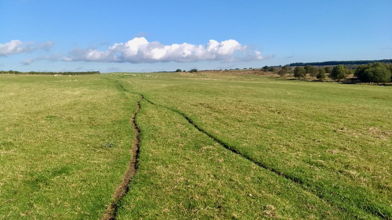 Sheep trod, Grime Moor